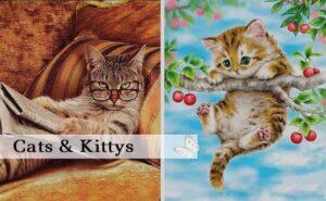 Cats & Kitty's
