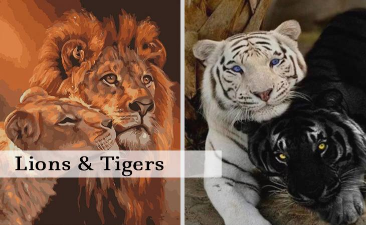 Lions and Tigers Paint by Numbers for Adults