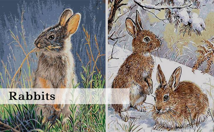 Rabbits Paint by Numbers for Adults