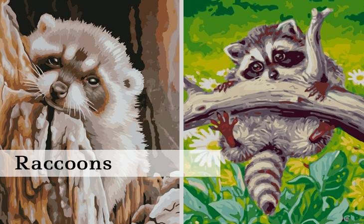 Raccoons Paint by Numbers