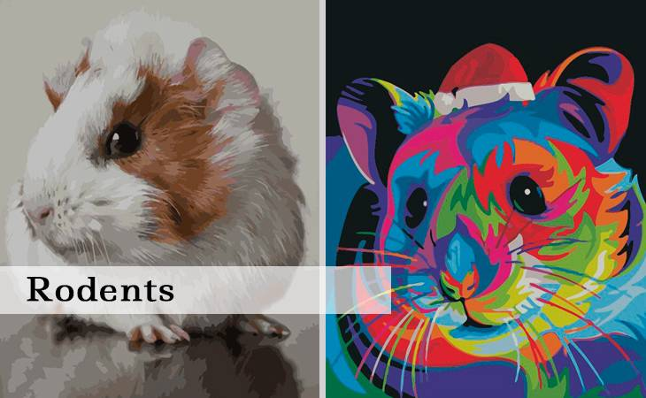 Rodents Paint by Numbers