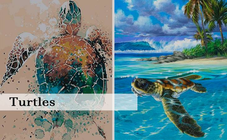 Turtles Paint by Numbers