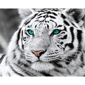 Black and White Tiger with Blue Eyes - DIY Drawing by Numbers Kit