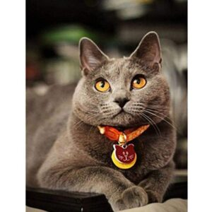 British Blue Cat - Acrylic Canvas by Numbers Kits