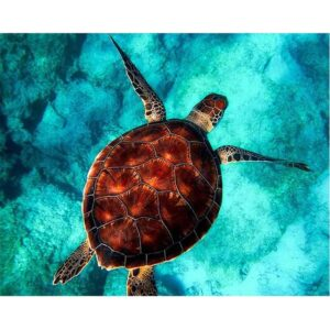 Brown Sea Turtle - Acrylic Paint by Numbers Kit