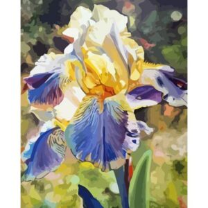 Rainbow Iris - Painting by Numbers Kits