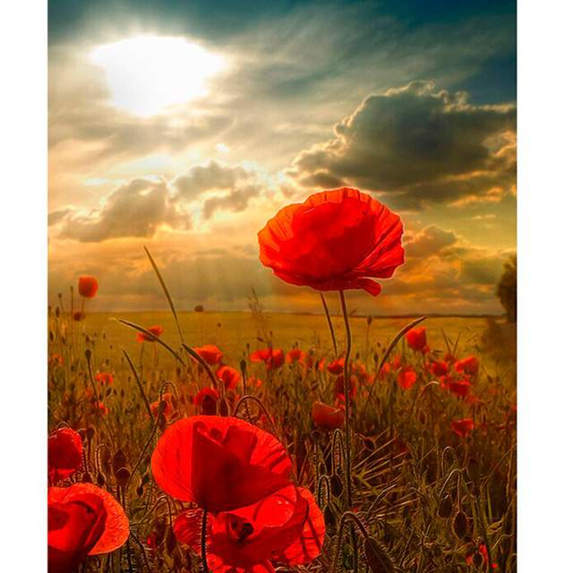 Red Poppies in Field - Color by Numbers Kit