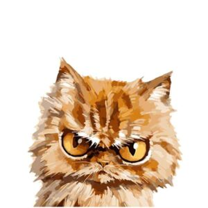 Angry Cat - Easy Paint by Number Kit