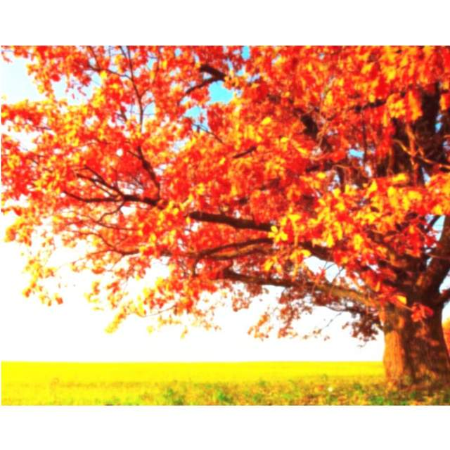 Autumn Tree in the Field - Coloring by Numbers Kits