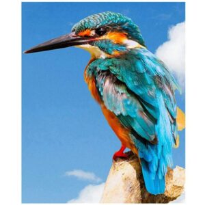 Common Kingfisher Bird - Color by Numbers for Adults