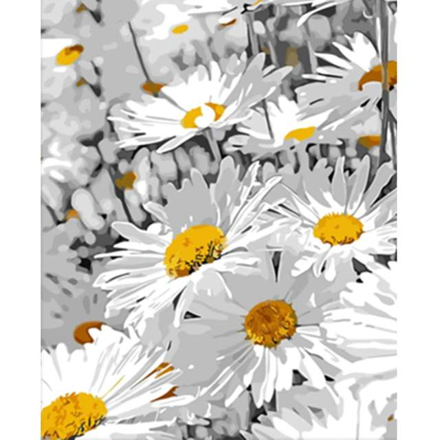 Daisy Flowers - Acrylic Painting by Numbers Kit