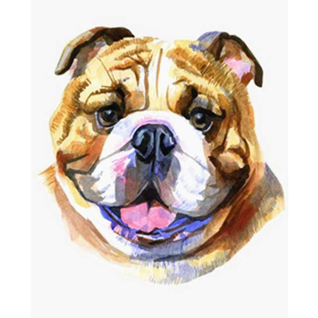 English Bulldog - Dogs Painting by Numbers for Adults