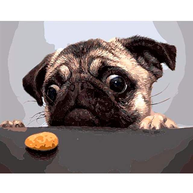 Pug and Cookie - Dogs Paint by Numbers
