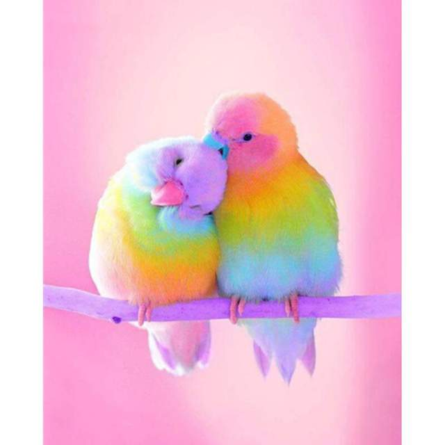 Rainbow Parrots - Paint by Numbers Birds