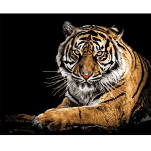 Siberian Tiger Resting - Animals Color by Numbers