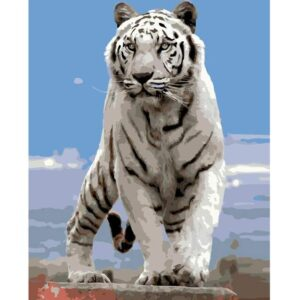 Wary White Tiger - Animals Paint by Numbers Kit