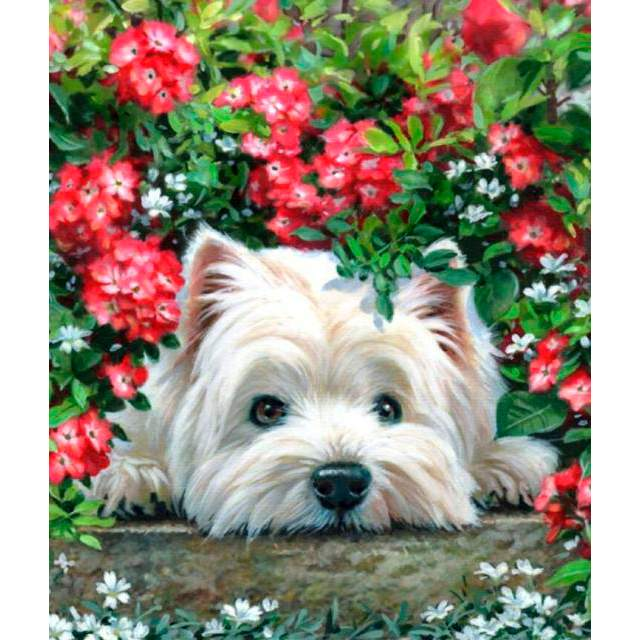 West Highland White Terrier - Paint by Numbers Dogs