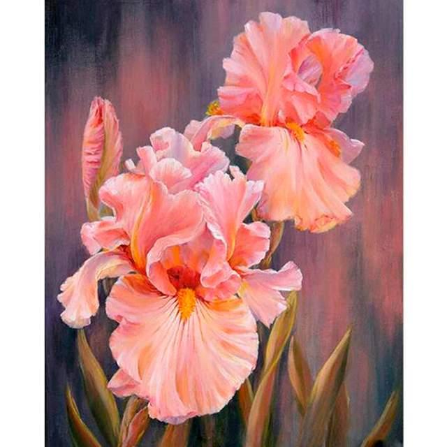 Peach Iris - Paint by Numbers Irises